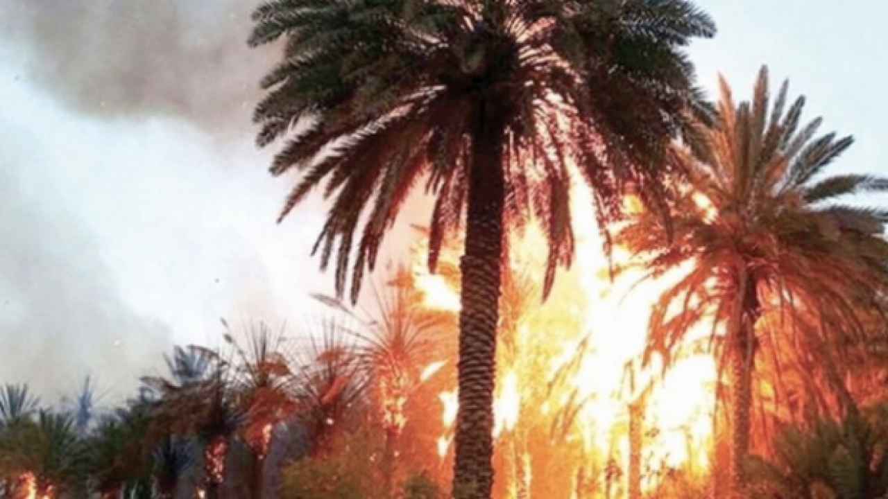 Oasis Fire Destroys Thousands of Palm Trees in Errachidia
