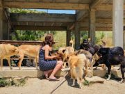 Salima 'Sally' Kadaoui, founder of SFT Animal Sanctuary and Project Hayat, sits with some of the dogs at the sanctuary.