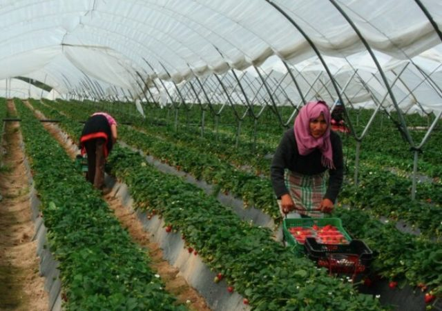 A Legacy of Abuse Continues for Moroccan Migrant Workers in Spain