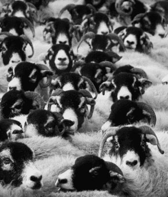 Eid al-Adha and the Debate of Animal Sacrifice
