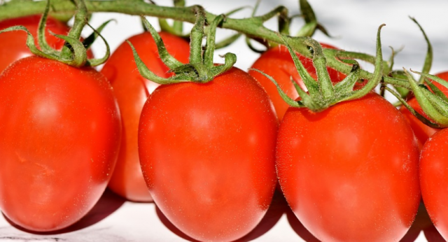 Moroccan Export of Tomatoes to EU Increased by 10%