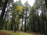 Morocco to Plant 50 Million Trees in a Day