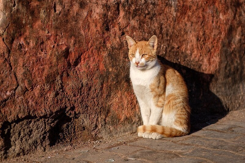 Opinion: Morocco's Street Cats Are Not Cute