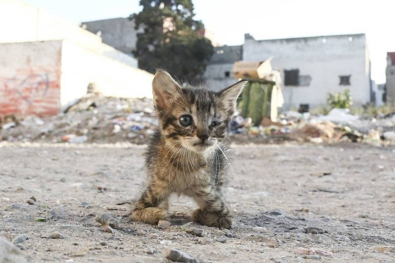 Opinion Morocco's Street Cats Are Not Cute