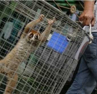 Spanish Civil Guard Dismantles Protected Animals Trafficking Network to Morocco