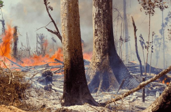 World Leaders Express Deep Concern Over Amazon Rainforest Fires