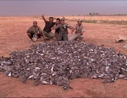 Gulf Tourists Responsible for Marrakech 'Bird Massacre' Did Not Have Valid Hunting Authorization