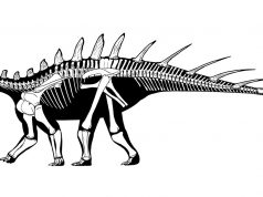 Paleontologists Discover Oldest Ever Stegosaur Bones in Morocco