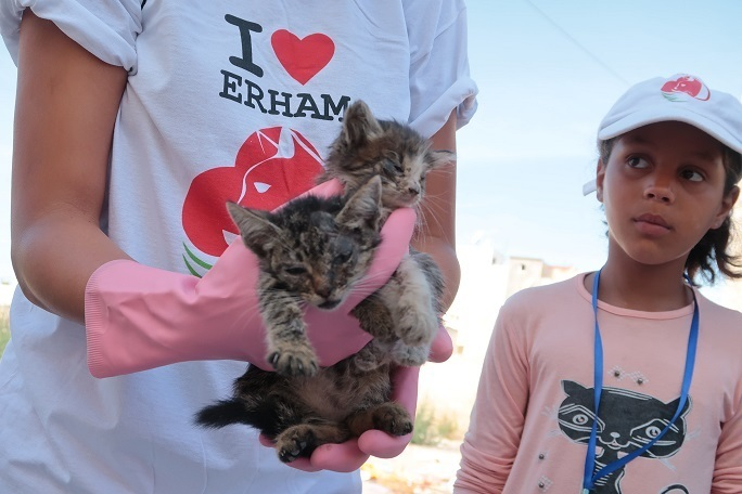 ERHAM: Taking Pity on Morocco's Cats