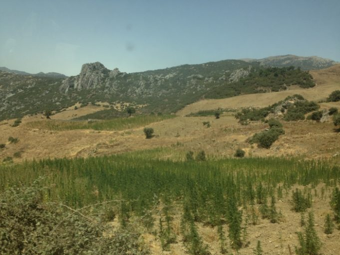 Moroccan cannabis