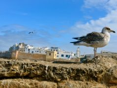 Essaouira Joins UNESCO's Creative Cities Network