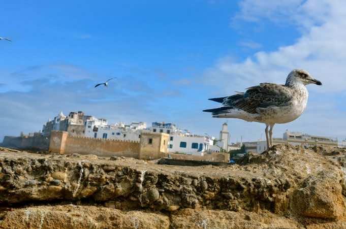 Essaouira Joins UNESCO's Creative Cities Network