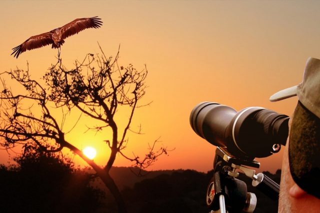 Tangier Port Authorities Confiscate Bird Watching Equipment Under Alleged New Rule²