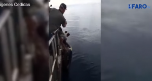Video, Fishermen Rescue Moroccan Irregular Migrants Near Ceuta