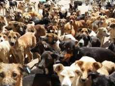 Morocco Will No Longer Kill Stray Dogs