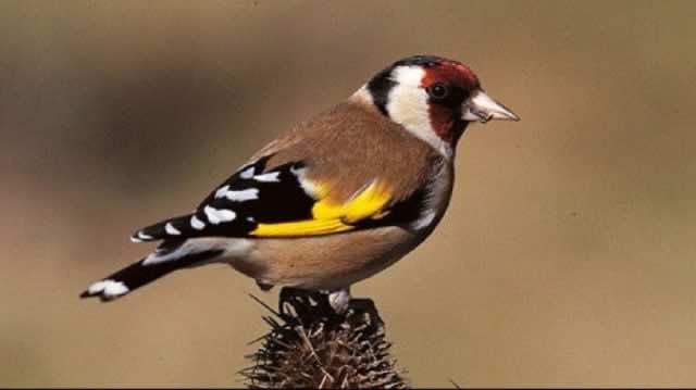 Customs Officers in Oujda Thwart Trafficking of 1,680 Birds