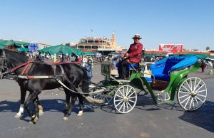 Horse-Drawn Carriage Drivers in Marrakech Debut Winter Uniforms
