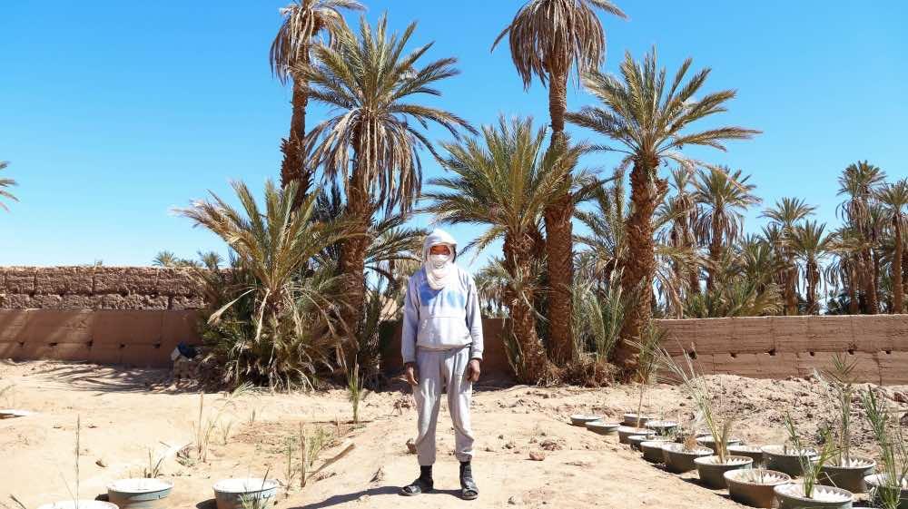 Oasis of M'hamid El Ghizlane