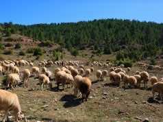 Morocco Allocates MAD 7.88 Billion to Fight Territorial Disparities