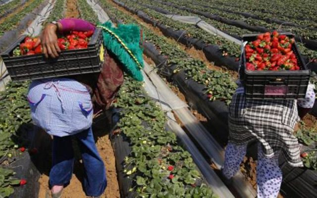 Spanish Selection of Moroccan Seasonal Workers to Start in December
