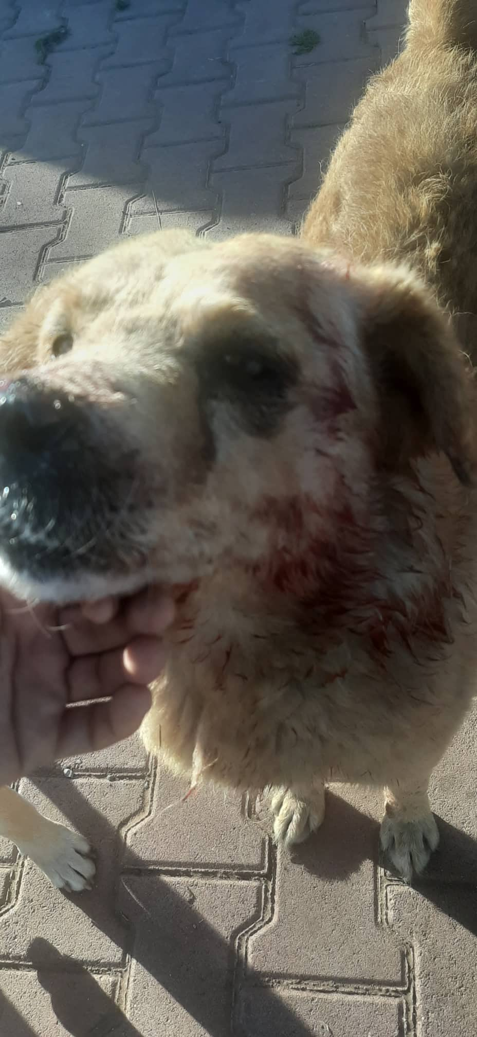 Moroccan Authorities Slaughter 80 Stray Dogs Despite Reforms