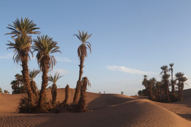 Greenpeace Calls for Immediate Action to Save Endangered Moroccan Oases