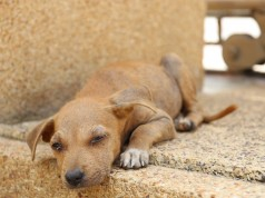 Local Authorities in Dar Bouazza Allegedly Slaughter 80 Stray Dogs