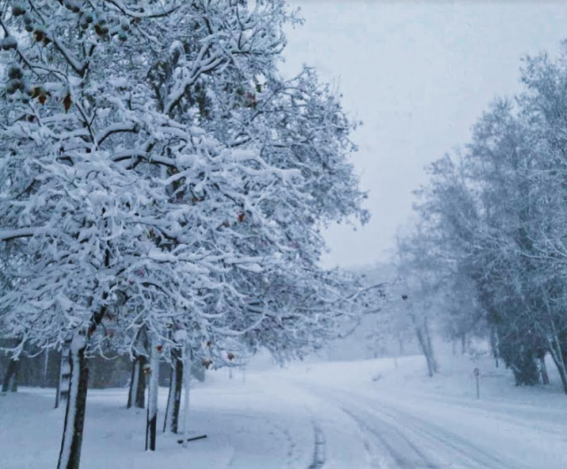 Snow covering the trees in Ifrane, Morocco