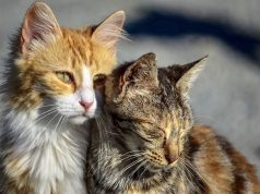 Spaniard With Rabies Symptoms Blames Moroccan Cat Bite