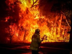Fatal Wildfire in Australia Kills Half Billion Animals, 24 People