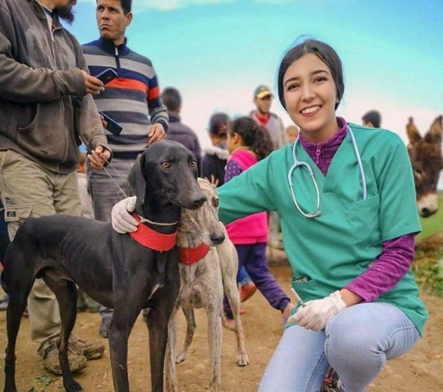 Veterinary Caravan Vaccinates 600 Dogs Against Rabies in Rural Morocco