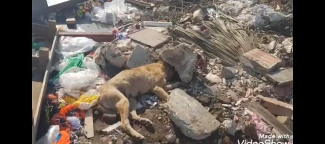 Farmers Torture Stray Dogs, Bury Puppies Alive Near Rabat