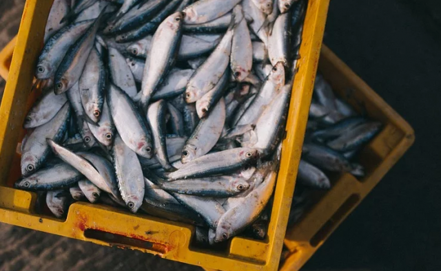 Morocco to Import Fishery Products from Brazil
