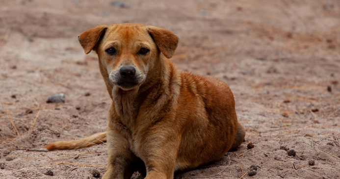 Stray Dogs Attack 12-Year Old Boy in Southern Morocco