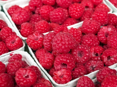 US Approves Import of Moroccan Raspberries