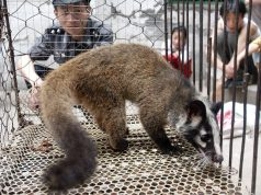 Coronavirus: China Bans Buying, Selling, Eating Wild Animals