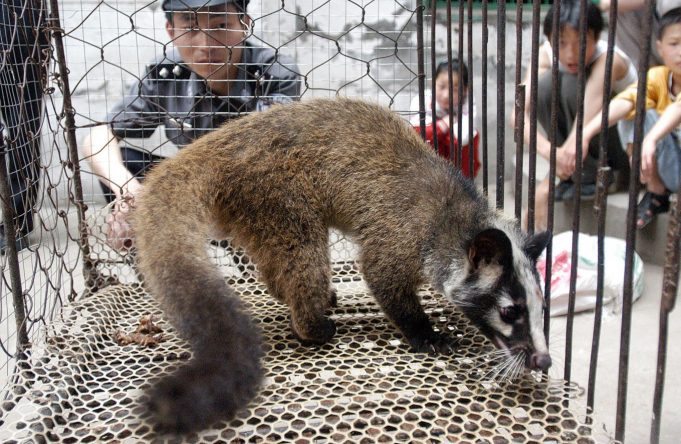 Coronavirus: China Bans Buying, Selling, Eating Wild Animals