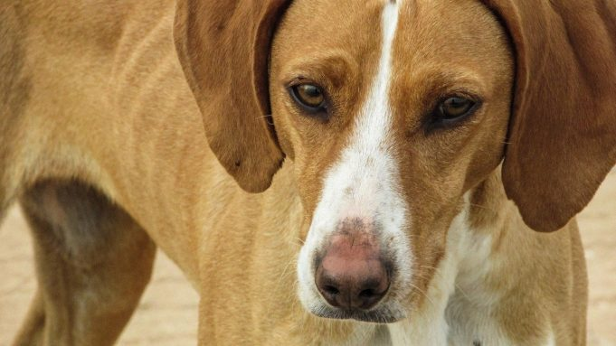Let's Get Real About Morocco's Stray Dog Problem