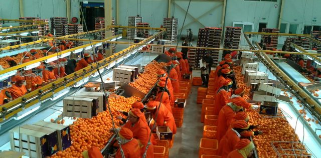 Dakhla to Welcome $11 Million Fruit and Vegetable Packing Station