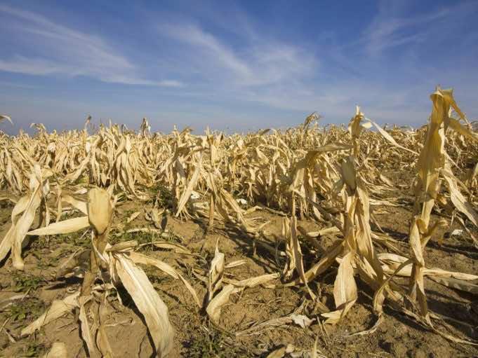 Drought in Morocco Worries Farmers in Casablanca-Settat Region
