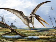 Scientists Discover New Flying Reptile Fossils in Moroccan Sahara