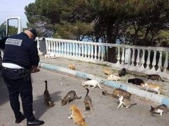 Moroccan Police Feed Stray Cats, Dogs Amid COVID-19 Lockdown