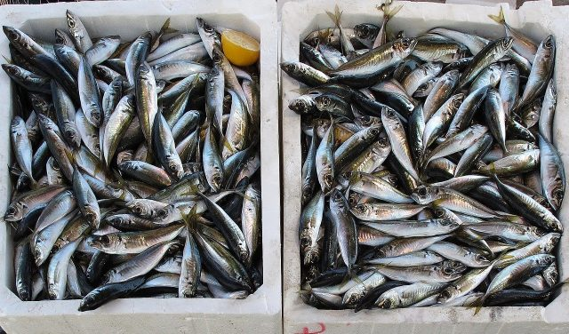 Morocco Maintains Stable Agriculture, Fisheries Exports Despite COVID-19