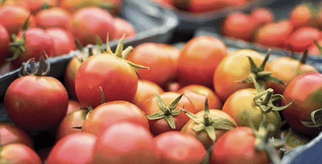 Spanish MEP: Moroccan Tomato Exports Threaten 'Stability of EU Market'