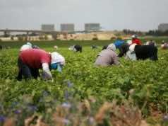 Italy's 'Green Corridor' Brings Back Moroccan Farm Workers