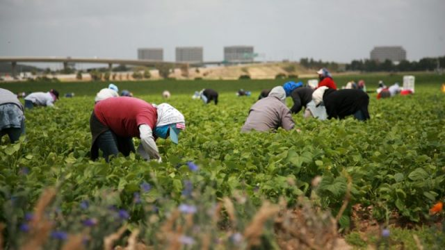 Italy's 'Green Corridor' Brings Back Moroccan Farm Workers