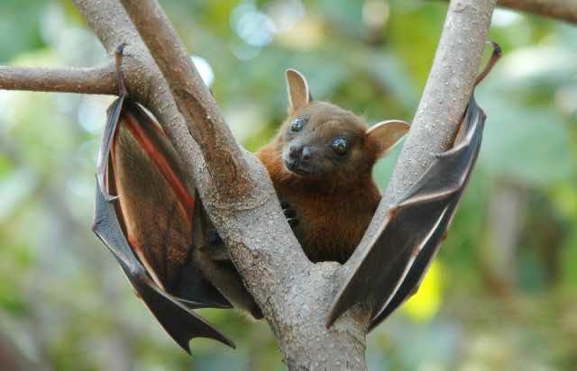 bats coronavirus covid-19 origin