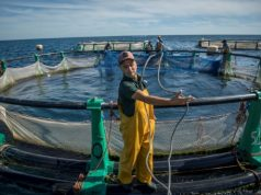 Norway, Netherlands Inject $2.5 Million Into Moroccan Aquaculture