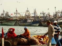 Morocco's Agricultural, Fisheries Sectors Adapt to COVID-19 Crisis