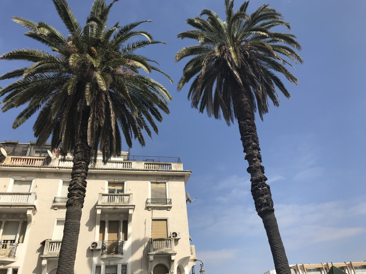 Palm trees tower over a building in the colonial section of Rabat